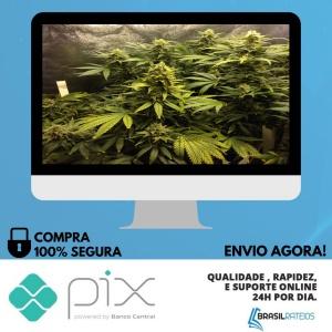 Cultivo Indoor de Plantas Medicinais - Jean Silva